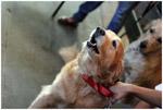 Cute Dog - Public Domain Pictures