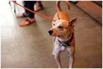 Dog - Public Domain Pictures