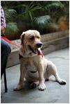 Dog Sit - Public Domain Pictures