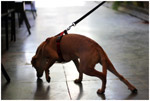 Dog Smell Sniff - Public Domain Pictures