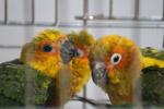 Colorful Love Birds - Public Domain Pictures