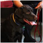 Pet Dog Black - Public Domain Pictures