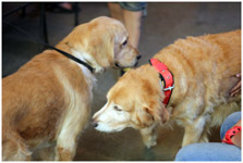 Two Dogs - Public Domain Pictures