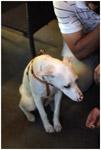 White Dog - Public Domain Pictures