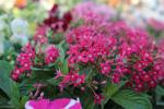 Fresh Pink Flowers - Public Domain Pictures
