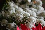 Flower Bouquet Closeup - Public Domain Pictures