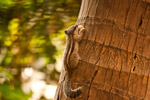Squirrel On Tree - Public Domain Pictures