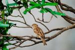 Beautiful Sparrow - Public Domain Pictures