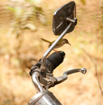 Bird On A Bike - Public Domain Pictures