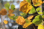 Autumn Leaves Brown Golden - Public Domain Pictures