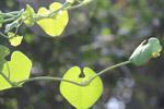 Beautiful Leaf Plant - Public Domain Pictures