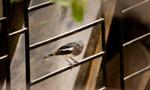 Cute Small Bird - Public Domain Pictures