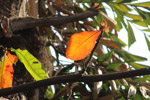 Beautiful Orange Leaf On Tree - Public Domain Pictures