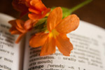 Orange Flower Dictionary - Public Domain Pictures