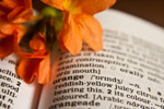 Orange Word Dictionary - Public Domain Pictures