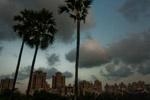 Palm Trees Buildings - Public Domain Pictures