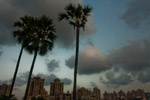 Palm Trees City - Public Domain Pictures