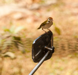 Bike Mirror Bird - Public Domain Pictures