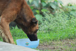 694-dog-drinking-water - Public Domain Pictures