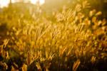 Farms Fields - Public Domain Pictures