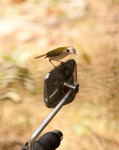 Rearview Mirror Bird - Public Domain Pictures