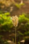 Single Stalk Farm - Public Domain Pictures