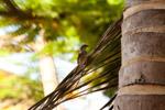 Sparrow Small Bird - Public Domain Pictures