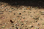 Ground Rubbish Dead Leaves - Public Domain Pictures