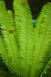 Ferns Green Plant - Public Domain Pictures