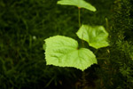 Green Leaves Beautiful - Public Domain Pictures