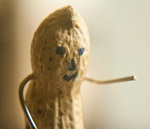 Groundnut Smiley - Public Domain Pictures