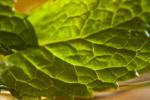 Leaves Closeup - Public Domain Pictures