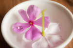 Pink Flowers In Bowl - Public Domain Pictures