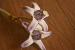 Small Purple Flower - Public Domain Pictures