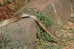 Snake In Garden - Public Domain Pictures
