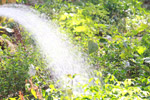 Watering The Garden - Public Domain Pictures