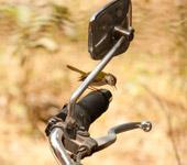 Small Bird Bike - Public Domain Pictures
