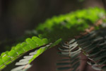 Weed Fern Closeup - Public Domain Pictures