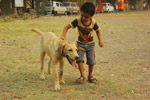 Kid Dog - Public Domain Pictures