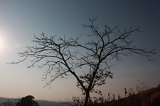 8-barren-tree - Public Domain Pictures