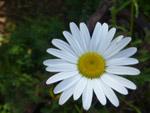 Beautiful White Flower - Public Domain Pictures