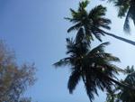 Coconut Tropics - Public Domain Pictures