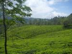 Green Hills - Public Domain Pictures