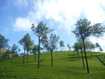 Lovely Scene Green Grass Blue Sky - Public Domain Pictures