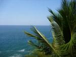 Palm Blue Water Sea - Public Domain Pictures