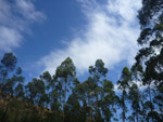 Tall Trees Forest Jungle Sky - Public Domain Pictures