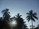Tropics Coconut Trees Palm - Public Domain Pictures