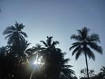 Tropics Coconut Trees Palm - Public Domain Pictures
