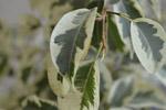 Leaf Closeup Potted Plant - Public Domain Pictures