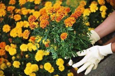 Is Gardening Your Hobby?